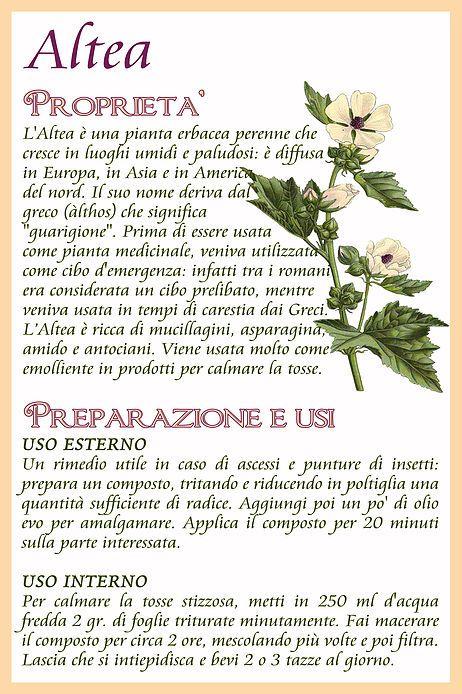 Calendario Vita E Salute.Il Calendario Dell Orto Fiori Felix Piante E Benefici