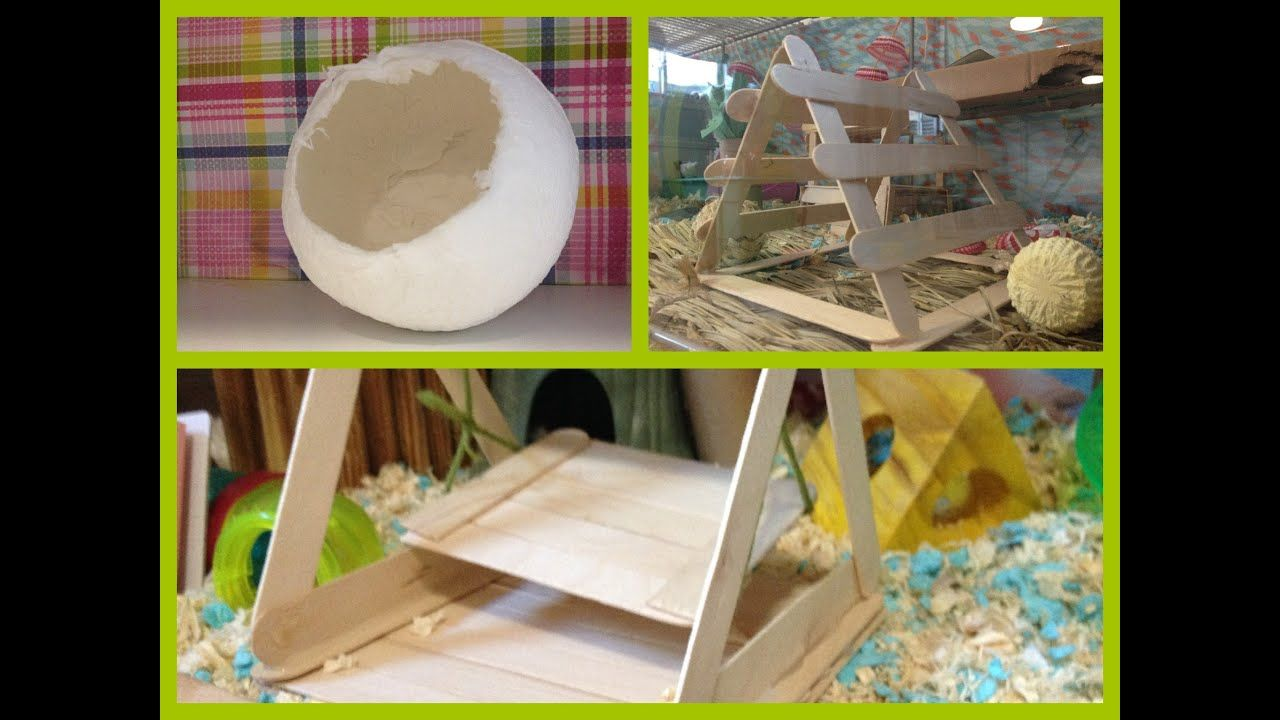 Diy toys for your hamsters in 2020 diy toys hamster diy