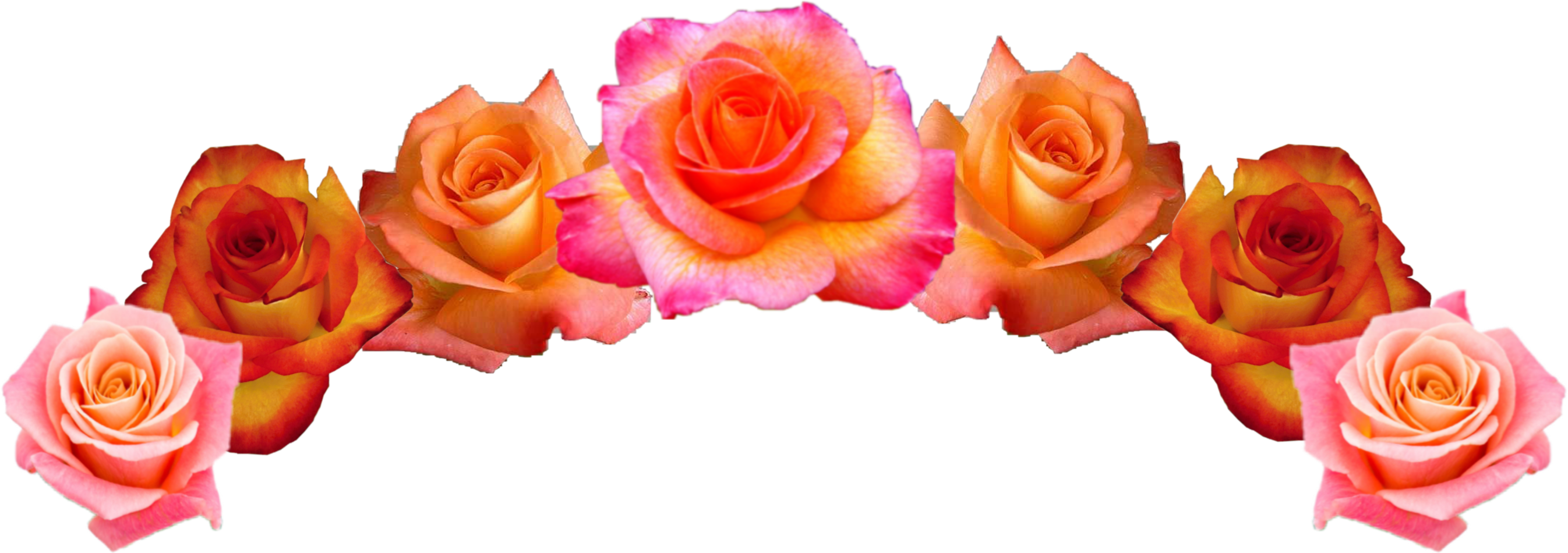 Flowercrown Flower Crown Headpiece Headband Pretty Rose Roses Beautiful Freetoedit Remixit Flower Crown Headpiece Flowers Rose