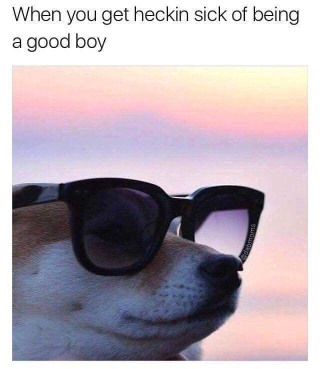 doggo gets eDGY . . . . #funny #funnymemes #meme #memes #cleanmemes #dankmemes #...