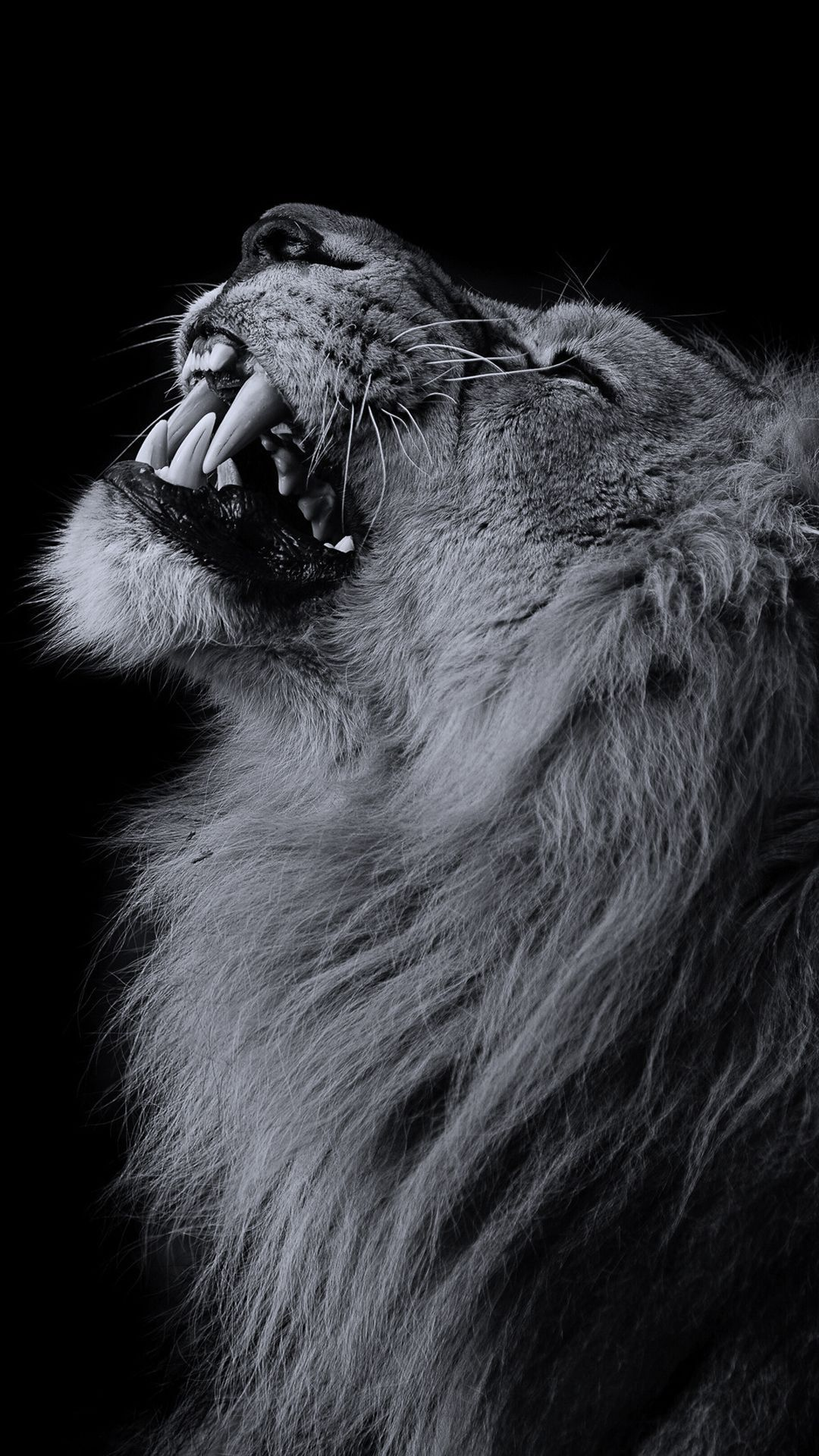 Black Lion Wallpaper 1080p For Iphone Wallpaper On Hupages Com If