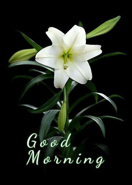 ป กพ นโดย Sangamitra Pradhan ใน G Mornings ธรรมชาต ดอกไม อร ณสว สด