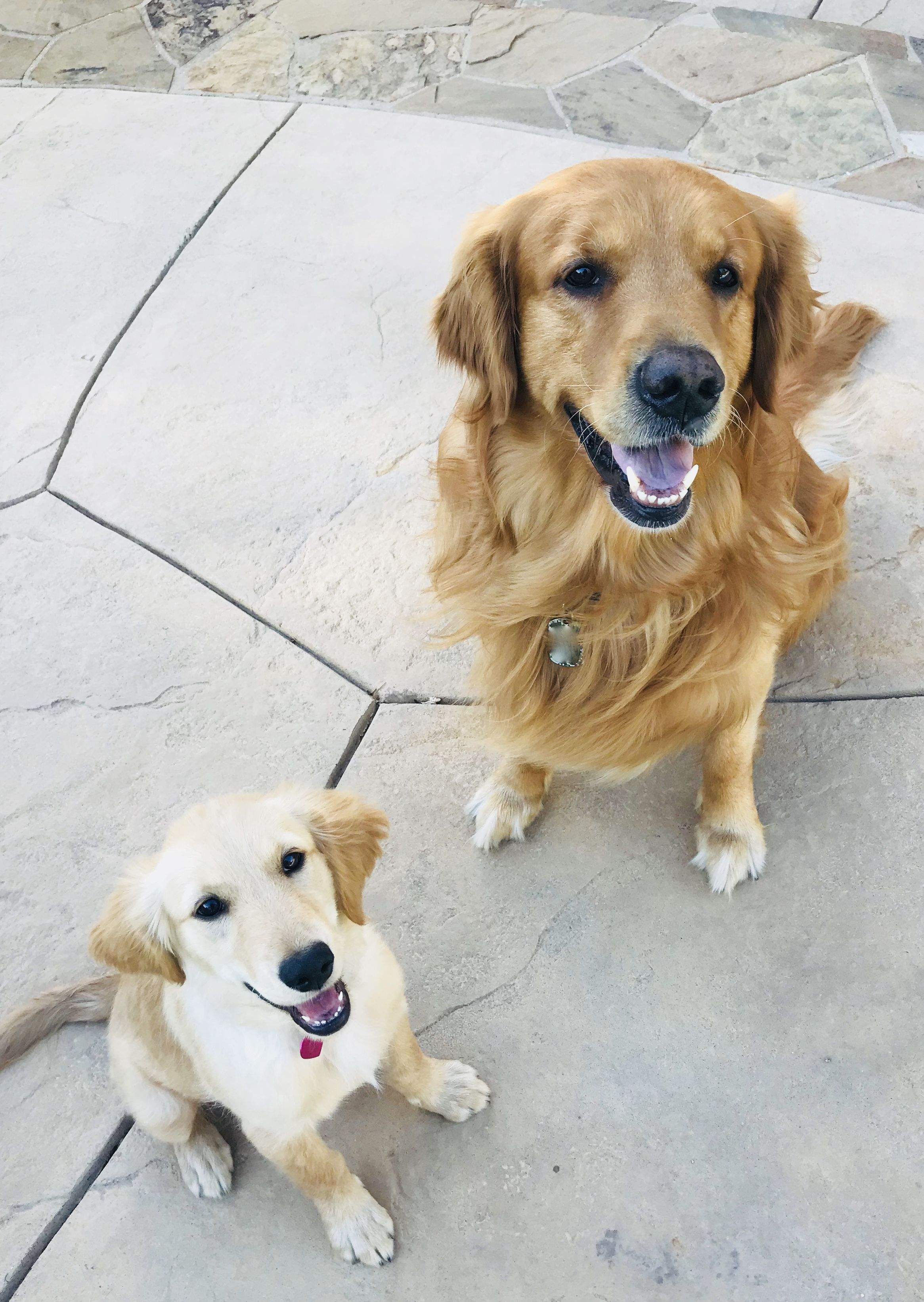 Why Puppy Love May Be Just What Your Relationship Needs Puppies