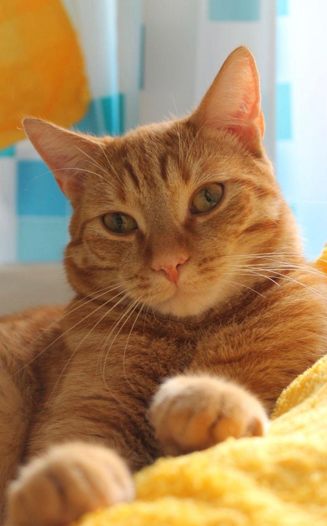 Pin by Lu Ann Jones on Cats Orange tabby cats, Tabby cat