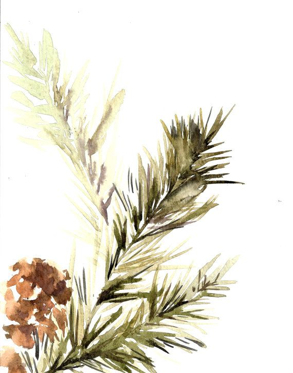 Pine Tree Branch With Pinecones Watercolor Painting Art Print
