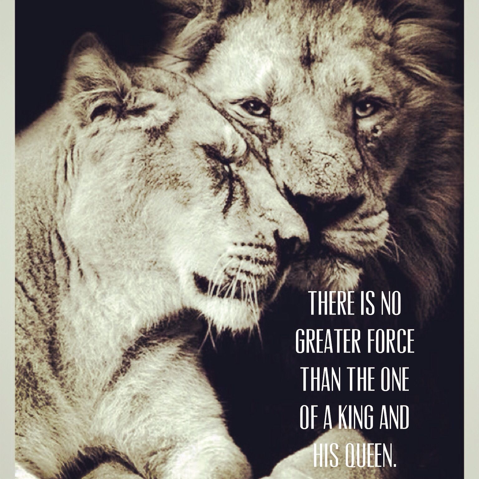 Lion King Love Quotes: King & Queen. #lion #lioness #love #king #queen