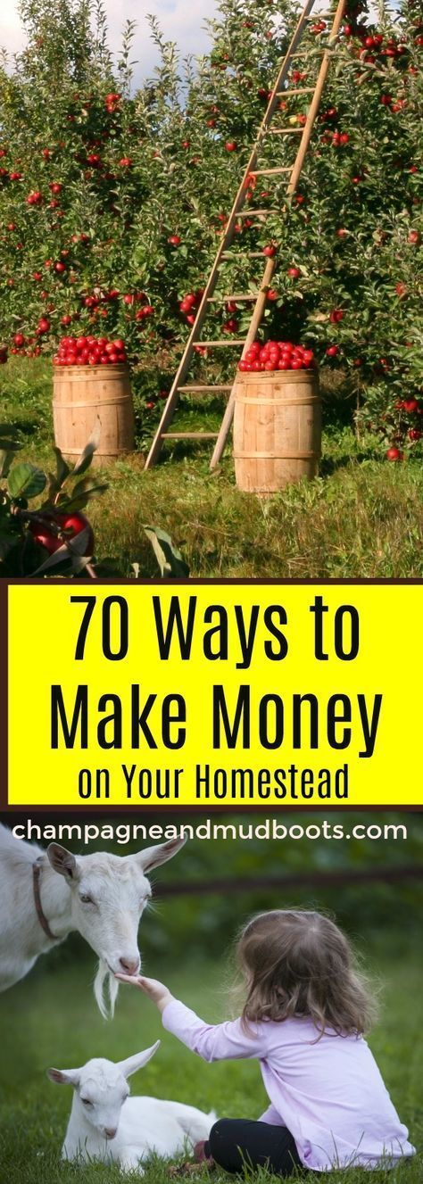 How To Make Money On Your Homestead