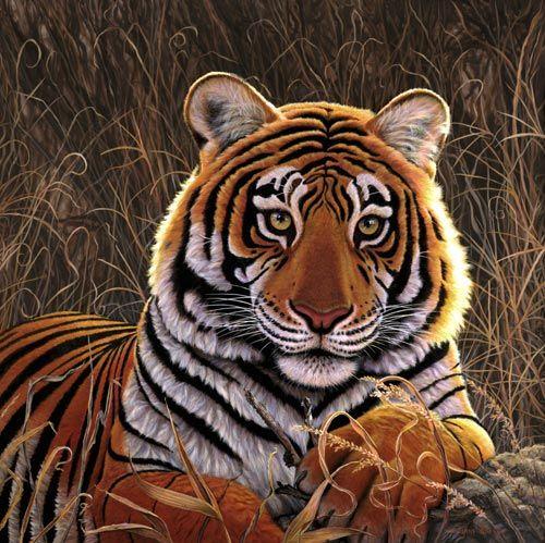 tiger eyes | Tiger Eyes - Tiger | A Love of Tigers | Pinterest ...