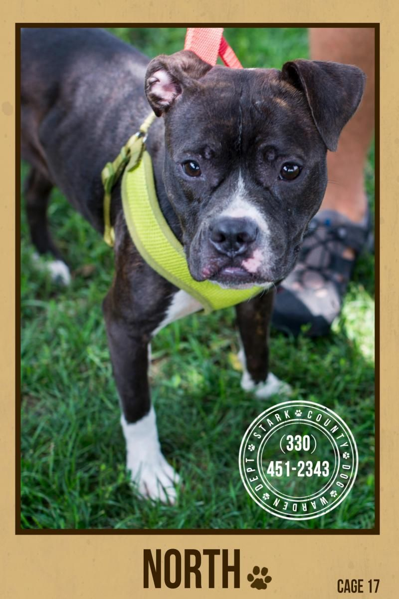 """Pretty girl """"NORI"""" (sweetheart) FOUND IN STARK COUNTY..Owner never came for her. NOW ADOPTABLE!!!! Come down & meet this sweet gir soon! CANTON, OHIO... https://www.petfinder.com/petdetail/29814809/"""