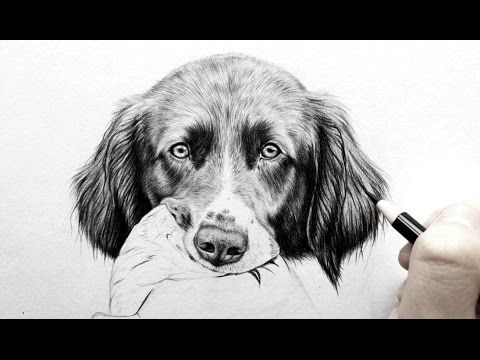 how to draw a realistic dog nose with graphite drawing tutorial leontine van vliet youtube