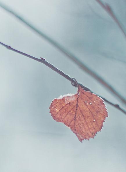 Leaf. Winter. Branch. Tree. Barren. Life.