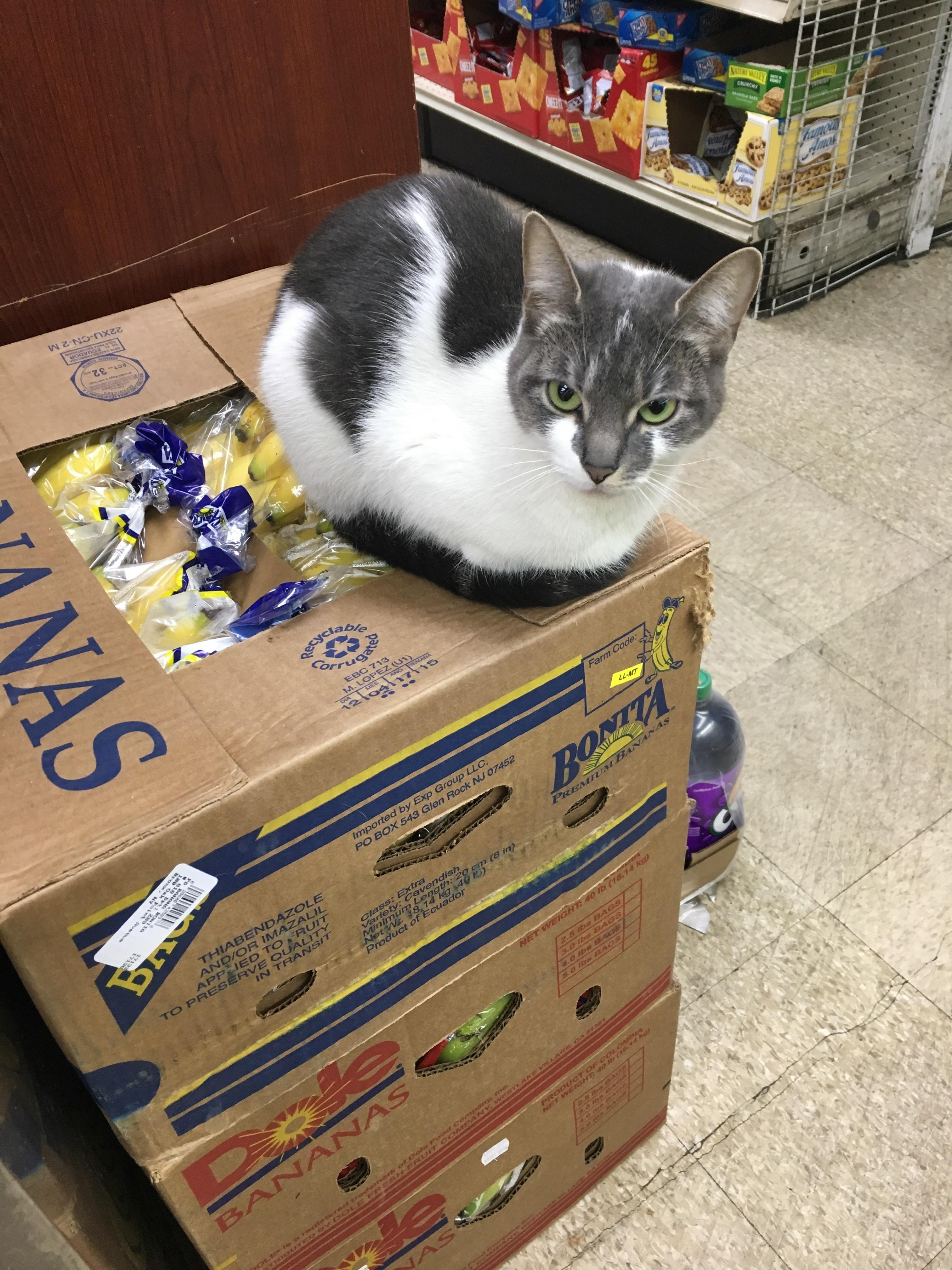 Bodega (Market) Cat http://ift.tt/2rxcLoT