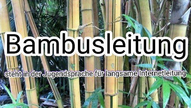 Bambusleitung Steht In Der Jugendsprache Fur Langsame
