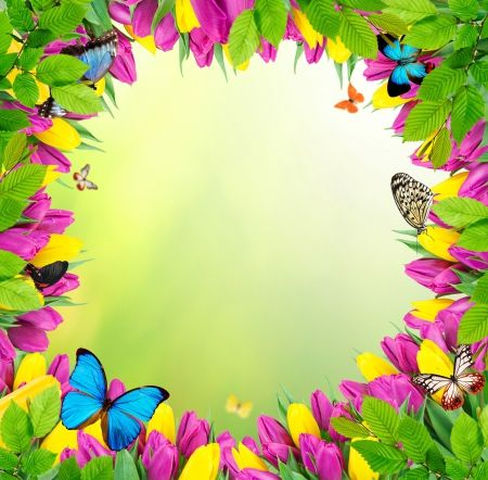 Flowers Butterflies Flowers Spring Frame Colorful
