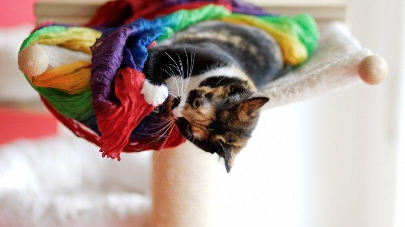 playful cat wallpaper