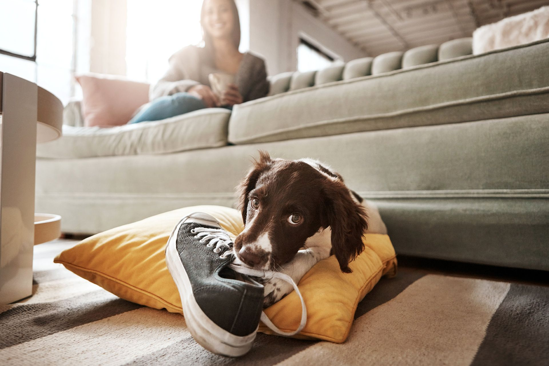 How To Stop Your Dog From Chewing Everything Inside Your Home Training Your Dog Dog Chews Puppy Whining