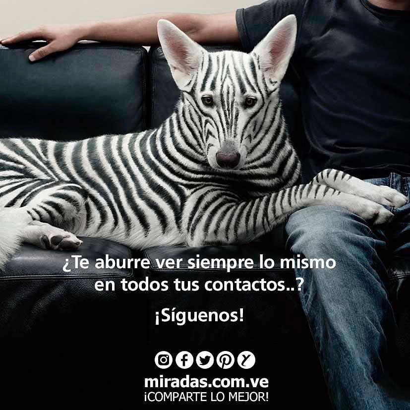 Ponte creativo Síguenos! . . #MiradasMagazine #Miradas #RevistaMiradas #MiradasDigital #Mercadeo #Tendencias #PetroMoneda #Petro #Arte #Tecnologia #Turismo #DestinoTuristico #Gastronomia #MiradaFotografica #Mochima #Anzoategui #Anz #Lecheria.