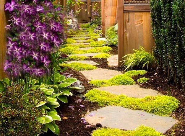 Plantas perfectas para sembrar en un camino de jardín Gardens - plantas para jardin