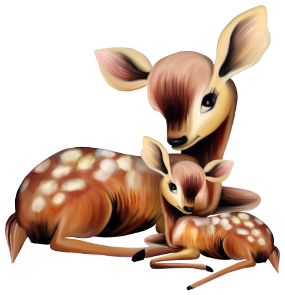 ADORABLE MOTHER AND BABY DEER bichinhos fofos