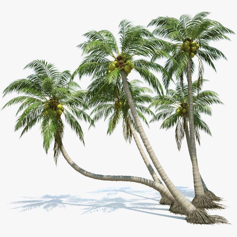 3d coconut palms set plants, 3d coconut palm tree set, a 3d tree
