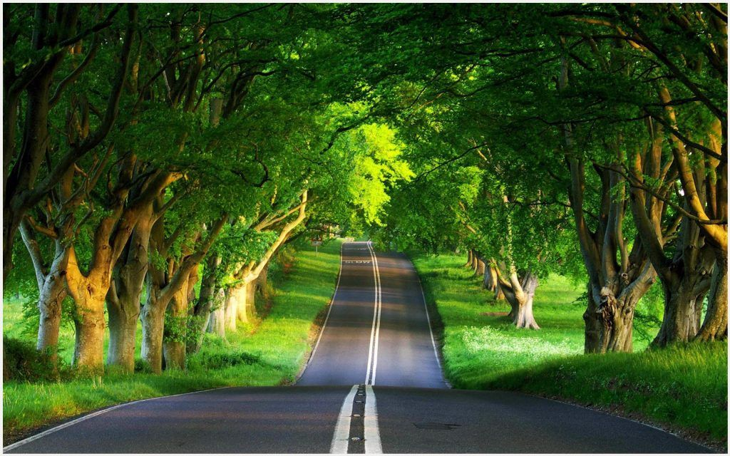 Green Road Wallpaper Beautiful Nature Green Road Wallpaper