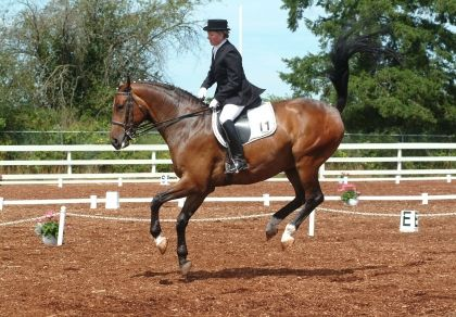 HorseWise: Bucking at the Canter