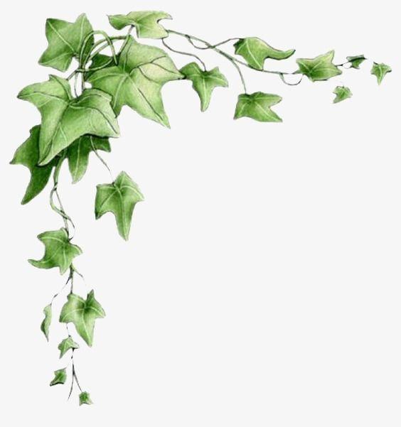 Leaf Border Creative Borders Leaves Green PNG Image