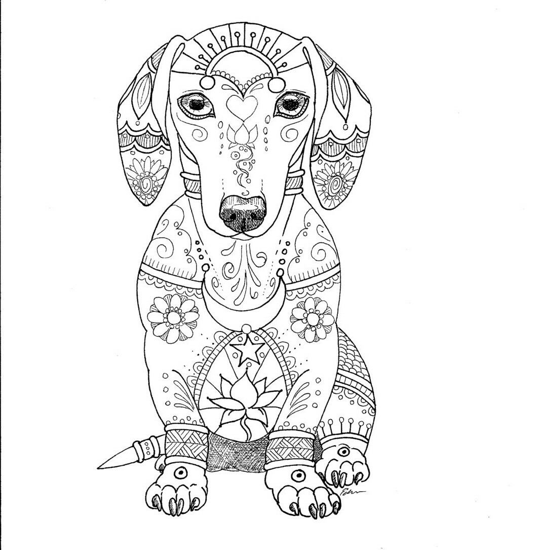 Dachshund Dachshund Colors Dog Coloring Page Coloring Books [ 1085 x 1068 Pixel ]