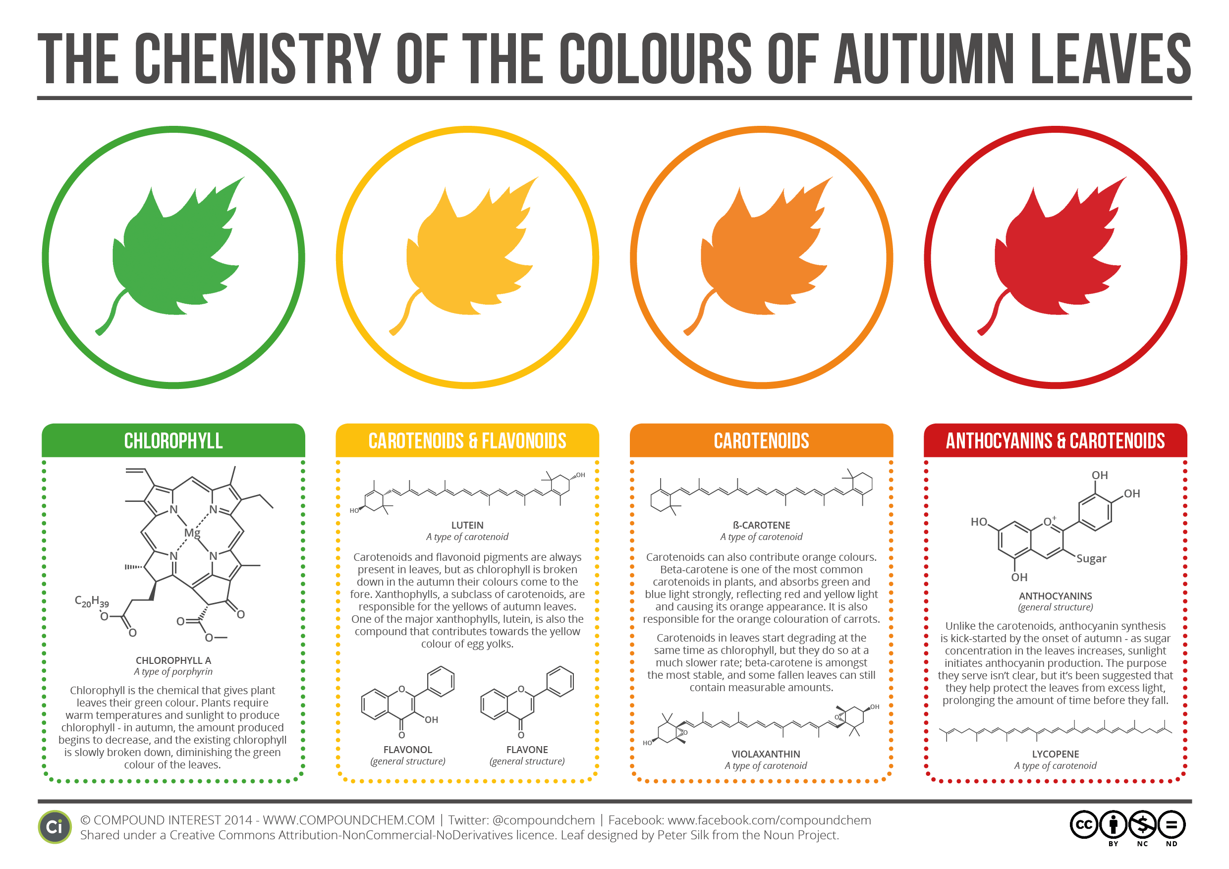 Chemistry Of The Colours Of Autumn Leaves V2