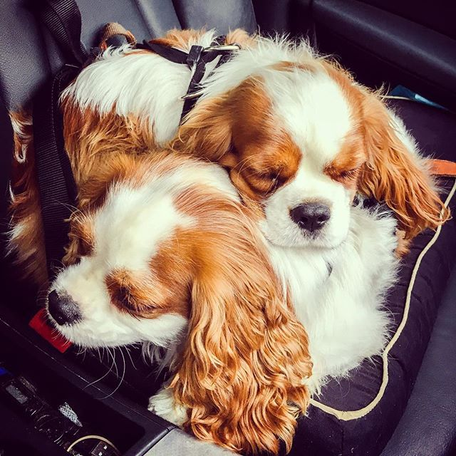 Charlie & Archie - All tuckered out on our drive home from our playdate with our friends today.