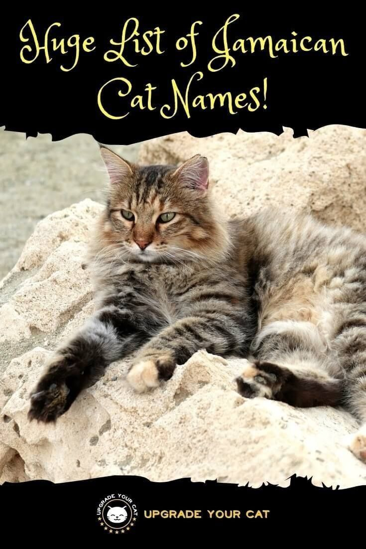 Huge List of Jamaican Cat Names! Upgrade Your Cat Cat