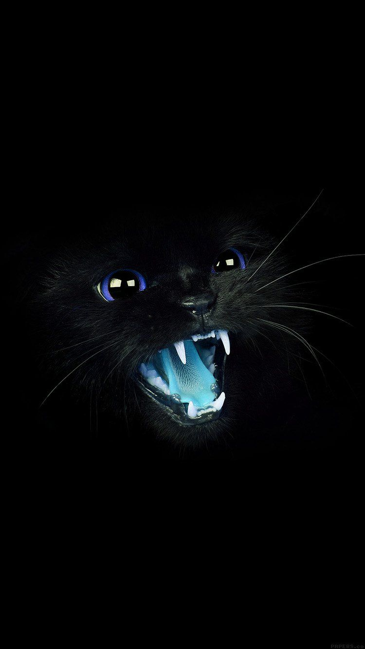 Papers Co Wallpaper Papers Co Mj55 Black Cat Blue Eye Roar Animal Cute 33 Iphone6 Wallpaper Jpg Animal Wallpaper Cat Wallpaper Android Wallpaper