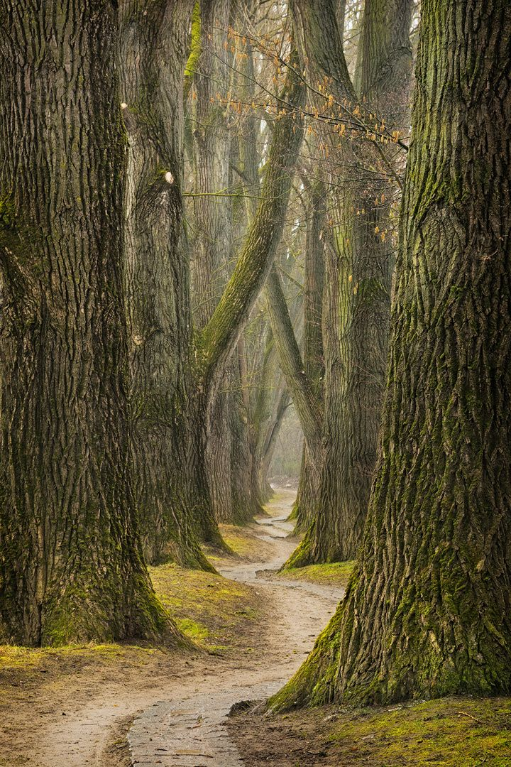 The Path By Kirsten Karius Nature Photography Tree Forest Scenery