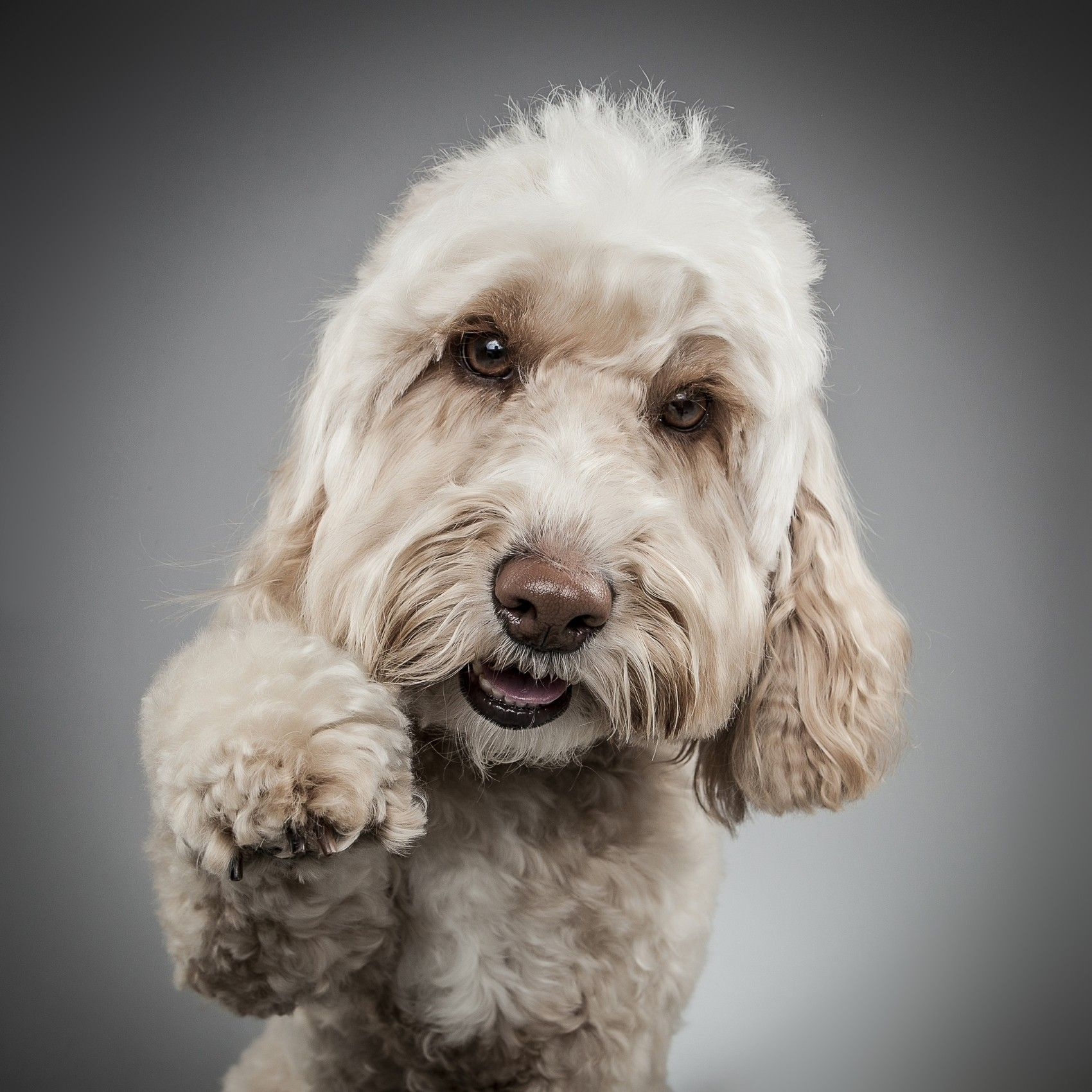 Pet Dog Portrait Photography Dog Portrait Photography Dog
