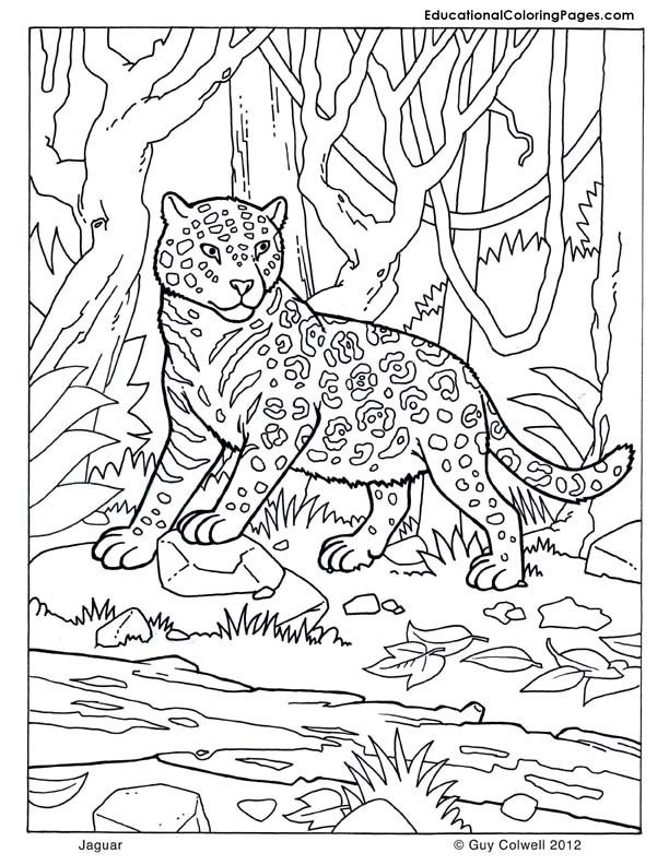 Jaguar Coloring Zoo Animal Coloring Pages Zoo Coloring Pages Jungle Coloring Pages