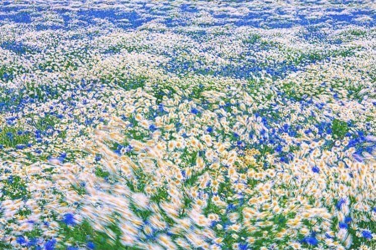 Minimalism On Twitter In 2021 Laptop Wallpaper Flower Field Cute Wallpapers