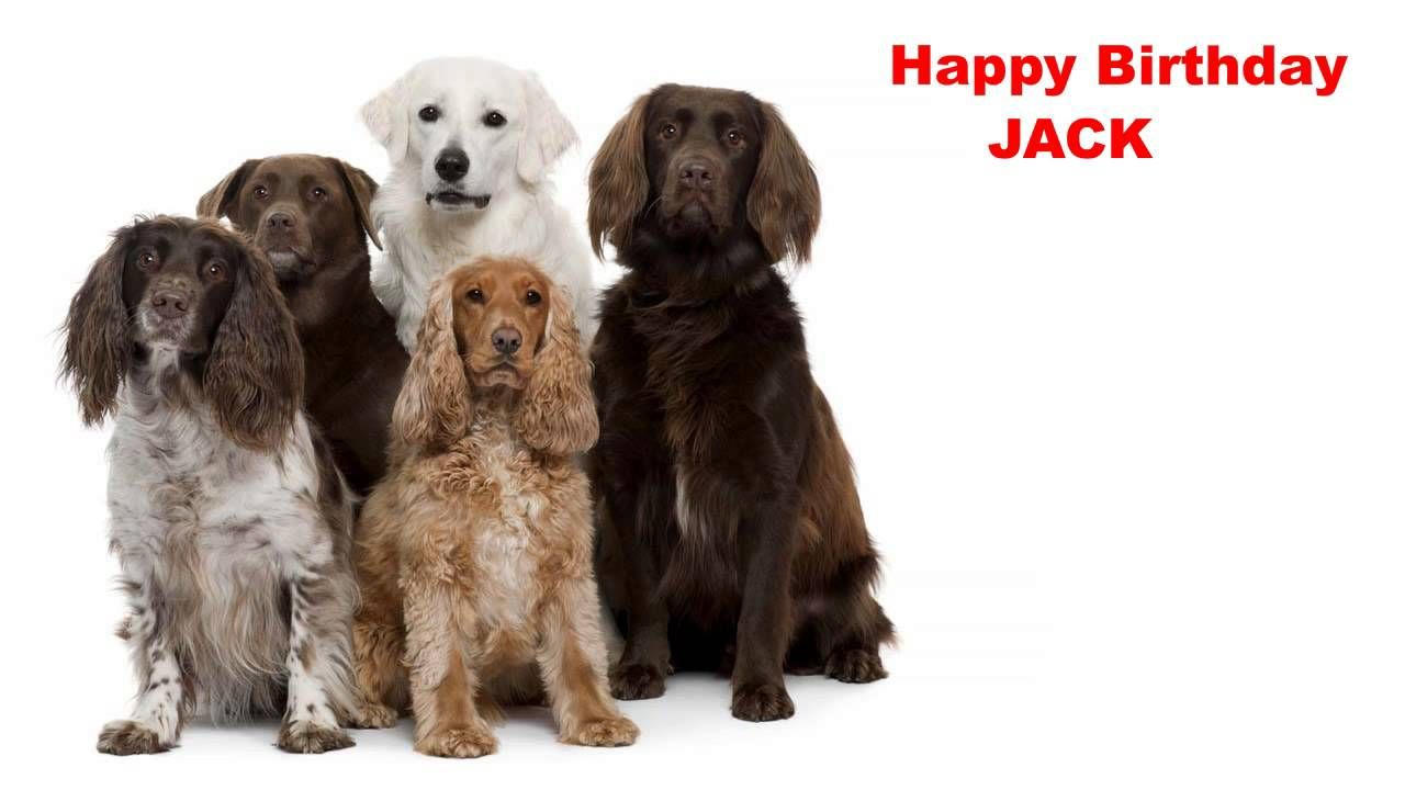 Jack Dogs Perros Happy Birthday Music Pinterest Songs