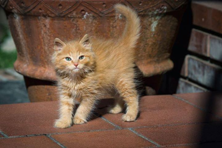 Maraglen Kittens Cutest Cute Cats Kittens And Puppies