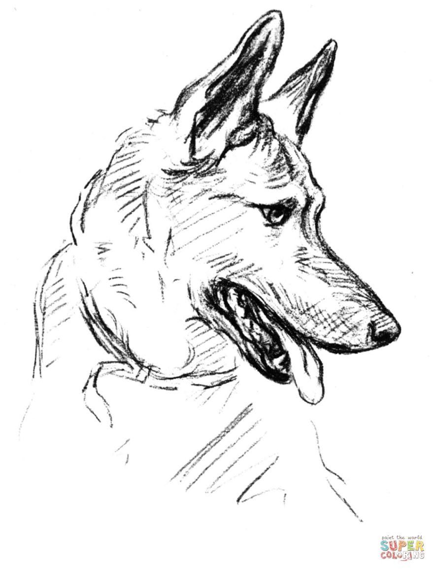 Baby German Shepherd Coloring Pages Mrengmeng Link Dog
