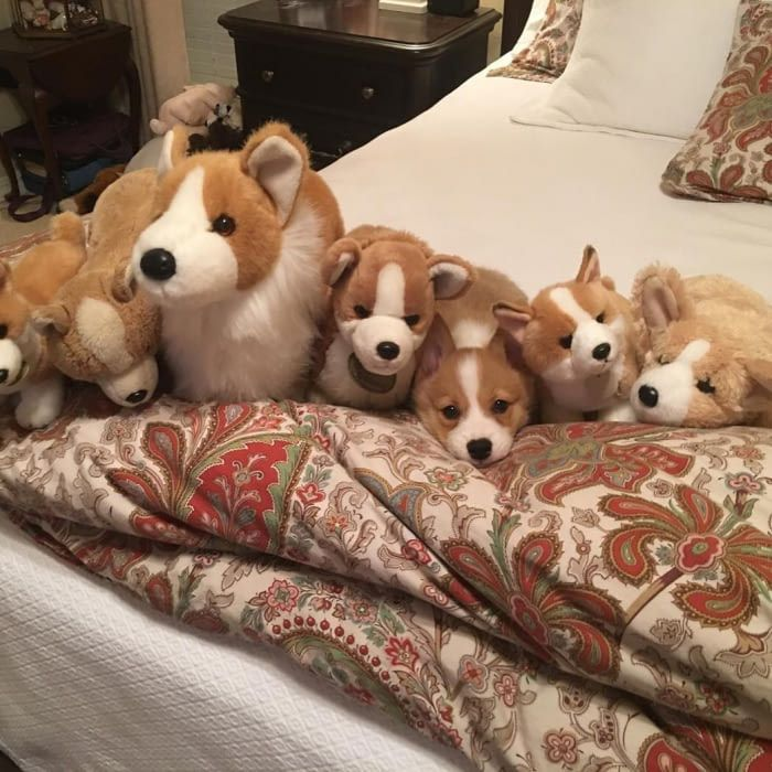 one of these things is not like the others puppiesforall