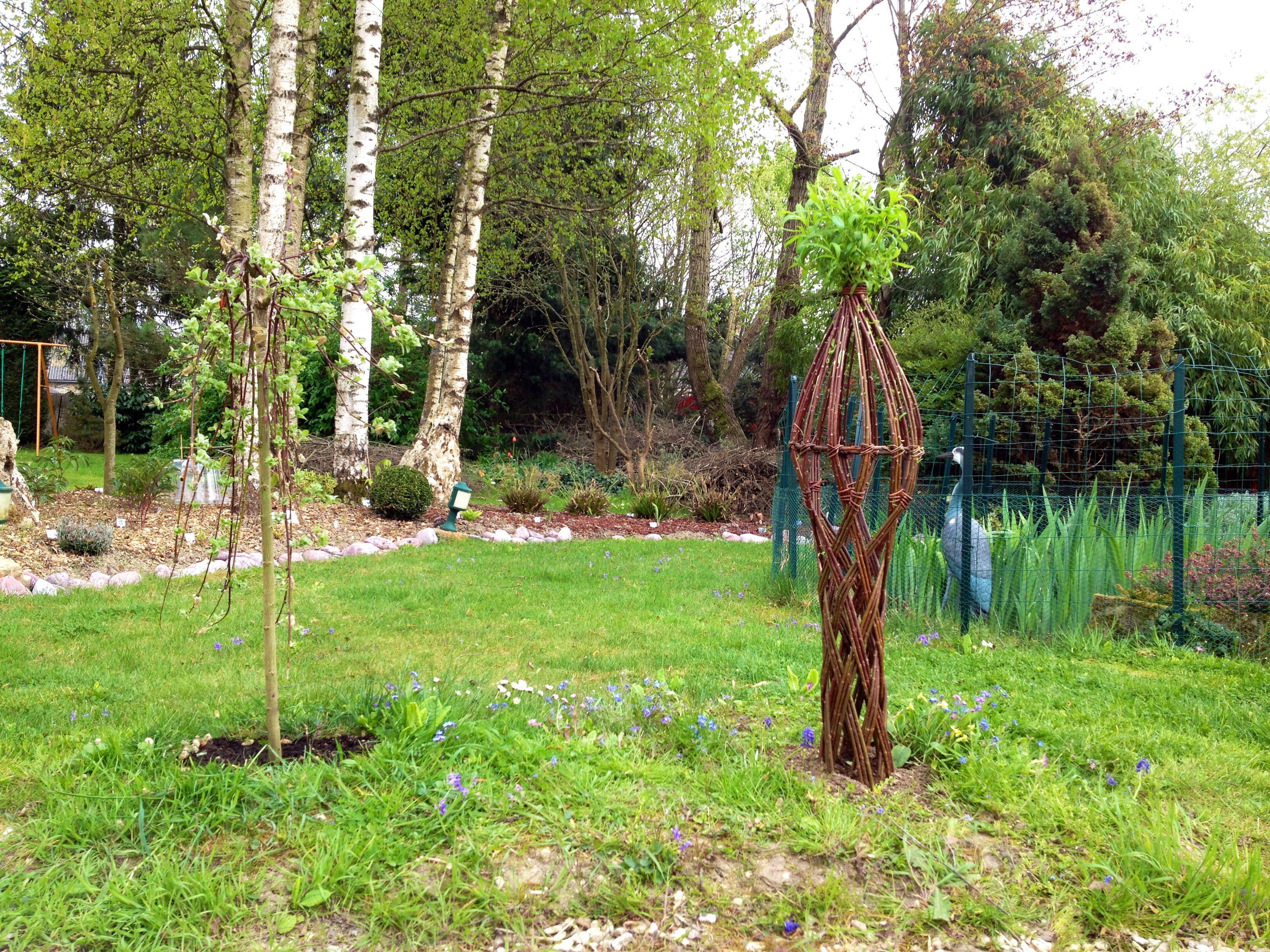 Saule tressé | Silence ça pousse...dans mon jardin ! | Pinterest ...