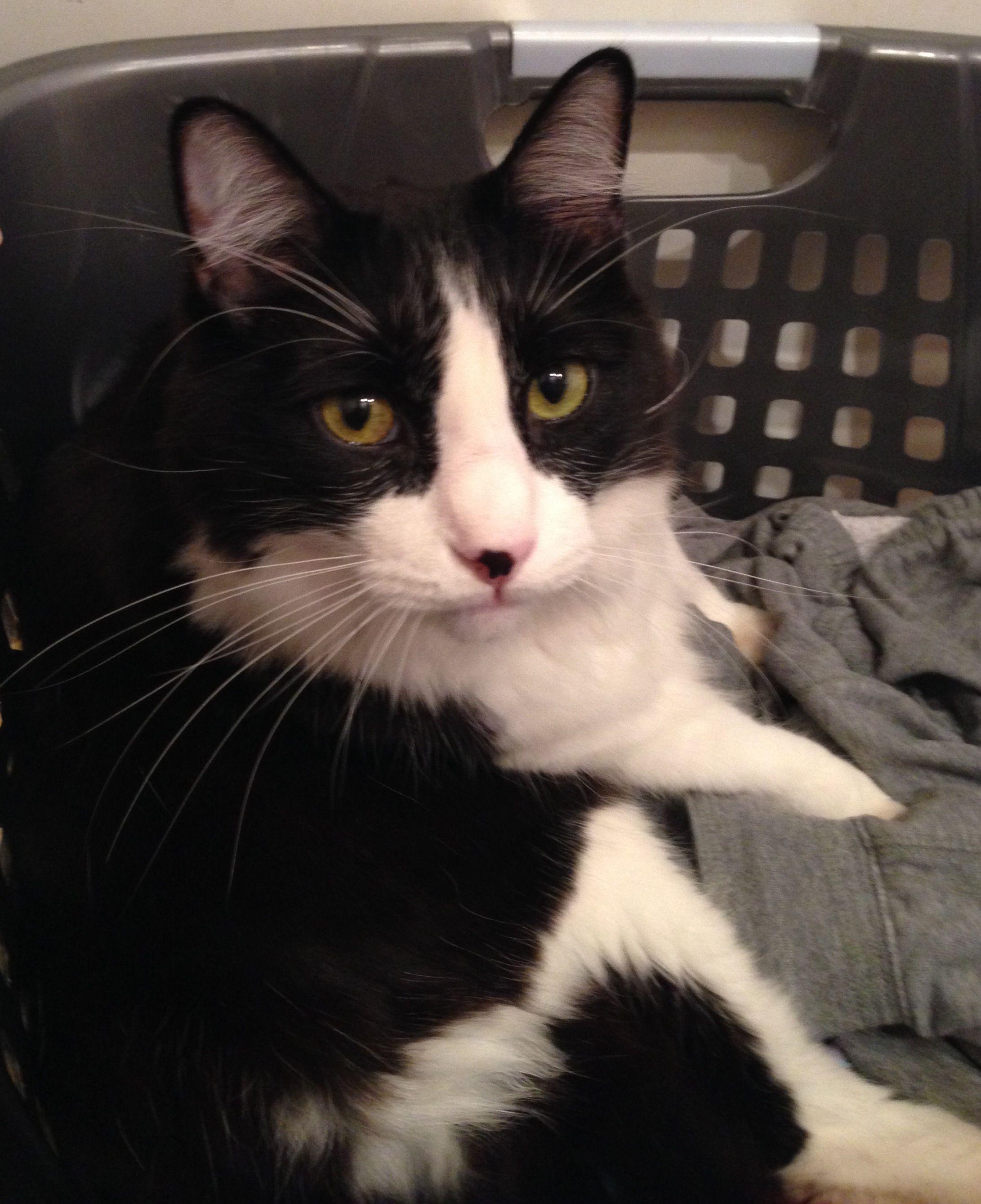 PMC Employee Pet Spotlight Sylvester Cloyes Pet