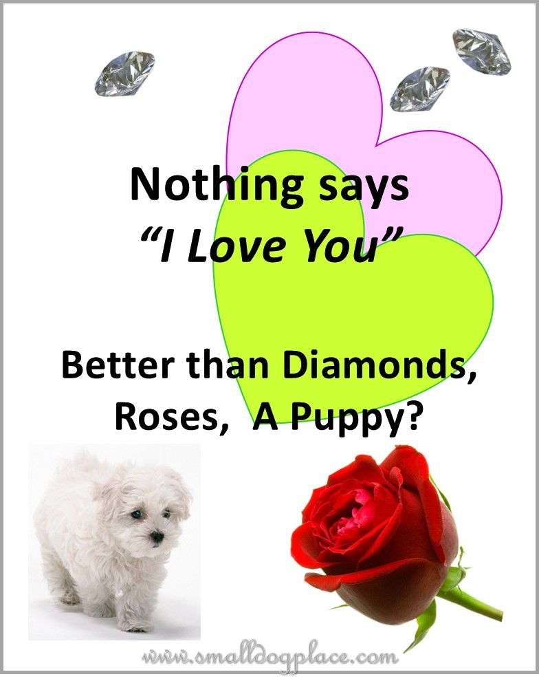 puppies as gifts nothing says i love you better than diamonds roses a