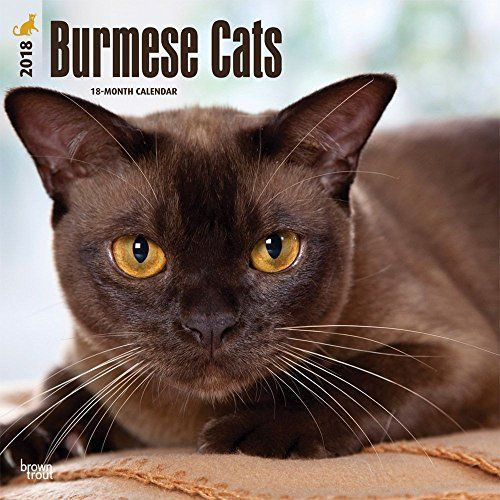 Funny Cat Wall Calendar 2018 Burmese Cats 2018 Wall Calendar Want To Know More Click On The Image This Is An Affiliate Link Burmese Cat Cats Cat Ages
