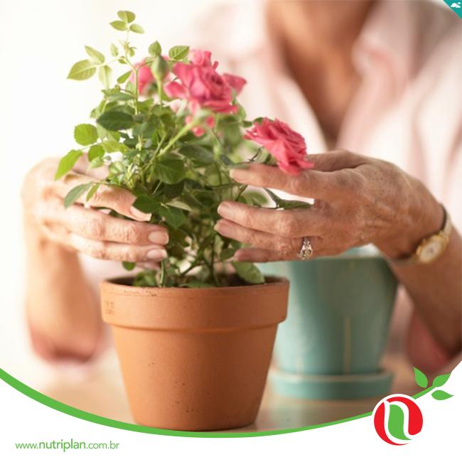 Toda espécie de planta precisa de espaço para crescer e se desenvolver. Se a planta está em um vaso pequeno é provável que suas raízes fiquem atrofiadas e, consequentemente, o vegetal perderá suporte, estabilidade e beleza. Assim, você pode até cultivá-la em um recipiente menor, mas assim que a plantinha brotar e crescer, transplante-a para um vaso mais amplo.