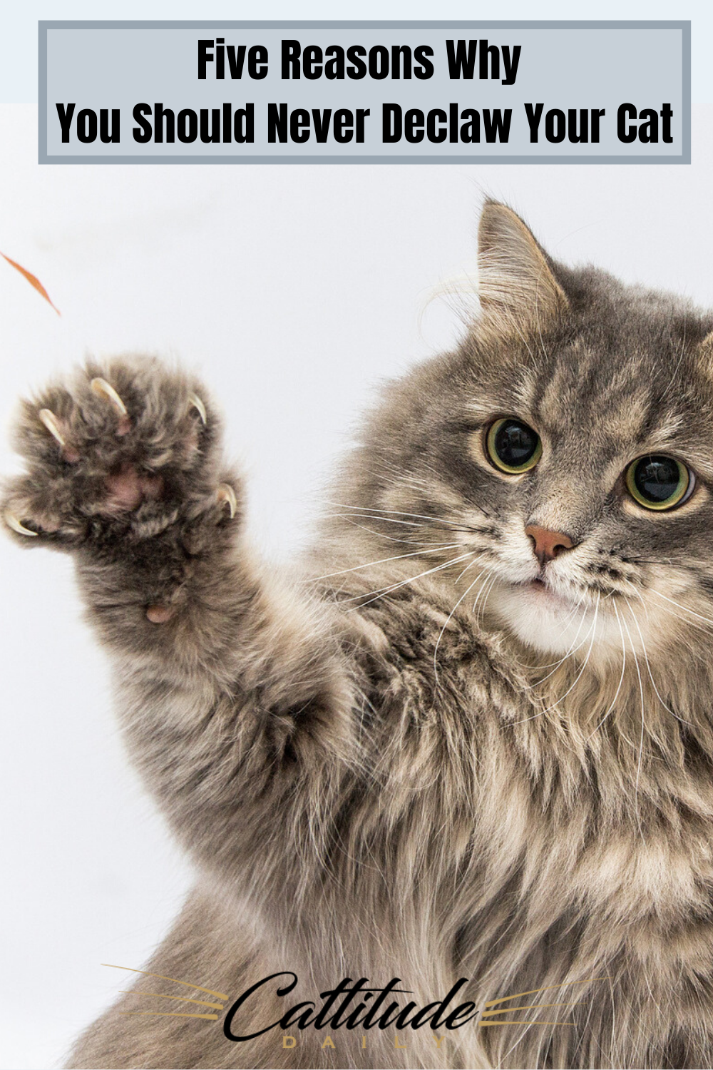 Your Cat S Claws Serve Many Purposes And When Their Claws Are Taken From Them They Can Suffer In Many Ways Cattitudedaily Cats