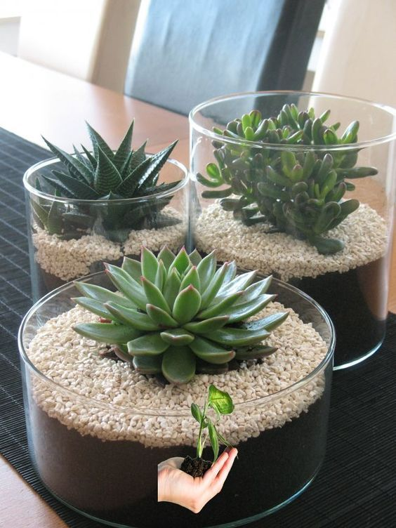 28 Cute Indoor Succulent Plant Decor Ideas To Beautify Your Home Jardineria En Macetas Plantas Para Terrario Suculentas