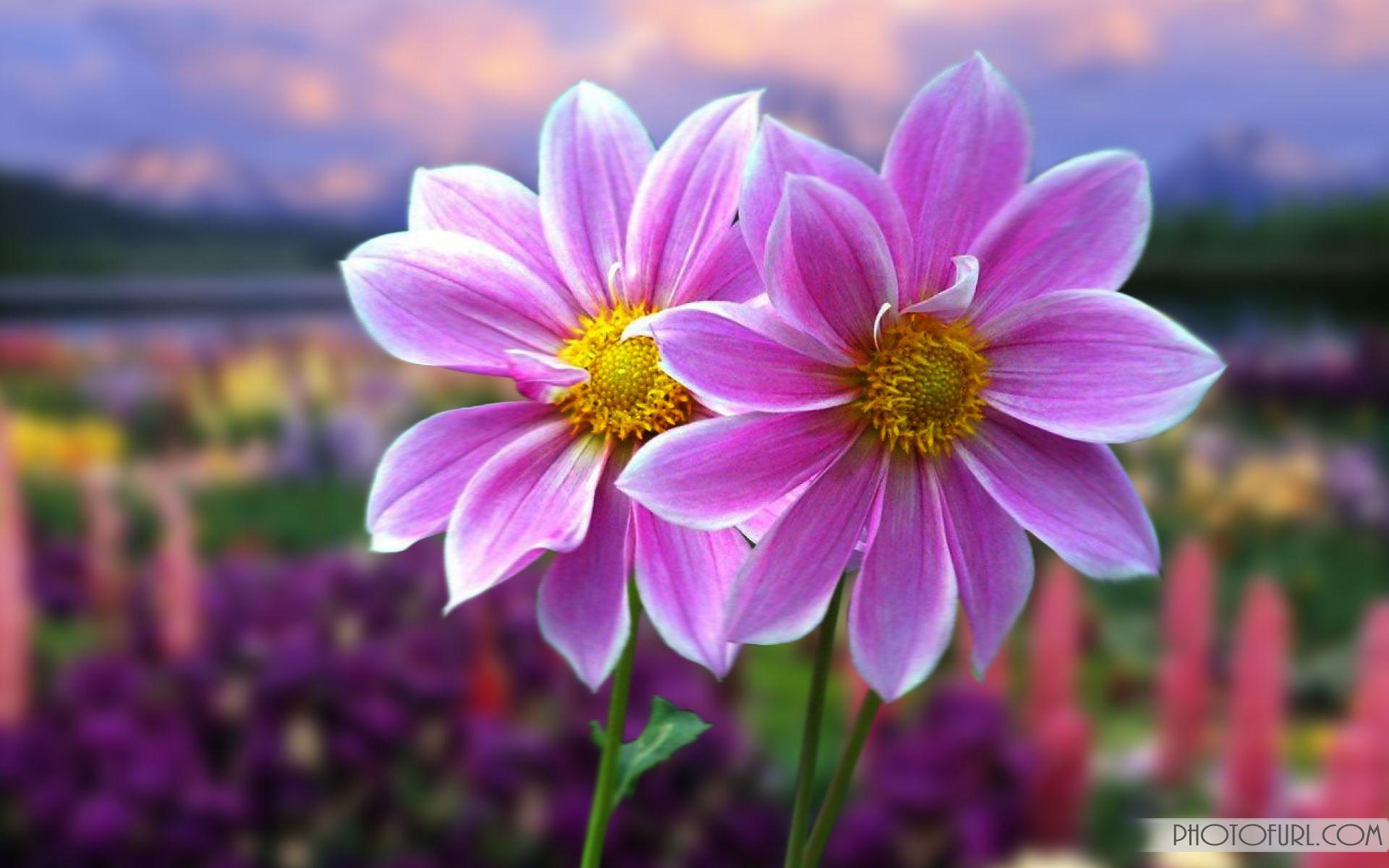 Animated Flowers Wallpaper Desktop