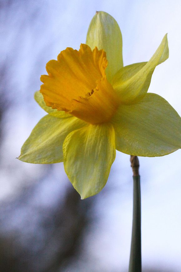 5footer S Profile Is Private Buzznet Daffodil Photography Flowers Photography Daffodils