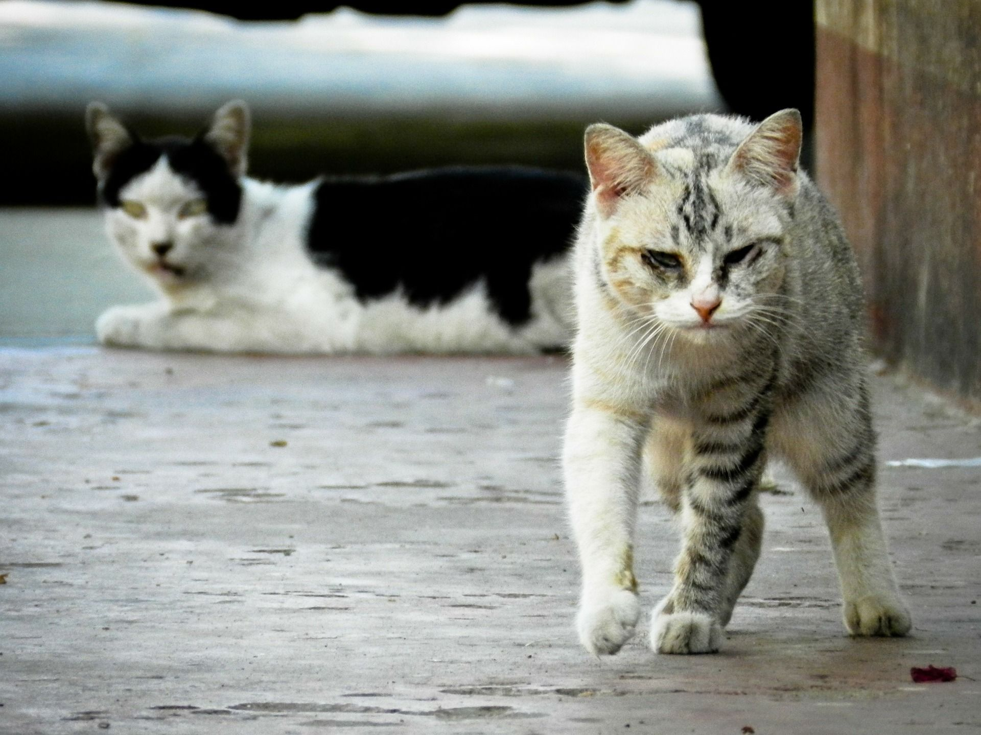 King Collin S Cat Palace Animalesanimados Animalesbebes